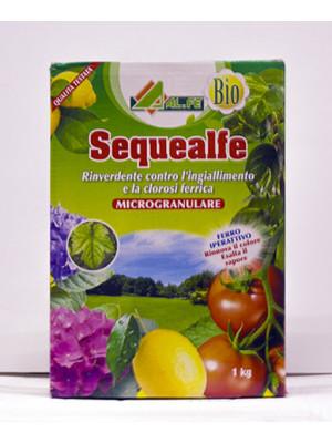 Sequealfe concime Bio chelato di ferro rinverdente 1 kg